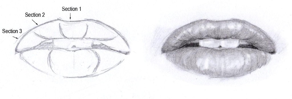 Drawing the mouth front view
