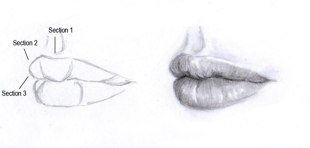 Drawing the mouth three guarter view